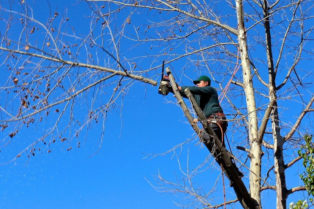 Contact Us-Southwest Ranches FL Tree Trimming and Stump Grinding Services-We Offer Tree Trimming Services, Tree Removal, Tree Pruning, Tree Cutting, Residential and Commercial Tree Trimming Services, Storm Damage, Emergency Tree Removal, Land Clearing, Tree Companies, Tree Care Service, Stump Grinding, and we're the Best Tree Trimming Company Near You Guaranteed!
