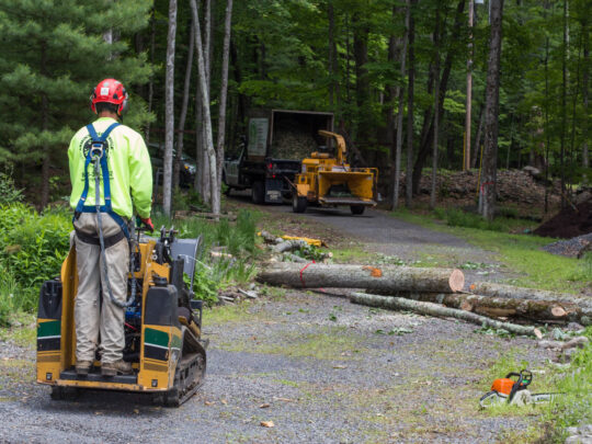 Emergency Tree Removal-Southwest Ranches FL Tree Trimming and Stump Grinding Services-We Offer Tree Trimming Services, Tree Removal, Tree Pruning, Tree Cutting, Residential and Commercial Tree Trimming Services, Storm Damage, Emergency Tree Removal, Land Clearing, Tree Companies, Tree Care Service, Stump Grinding, and we're the Best Tree Trimming Company Near You Guaranteed!