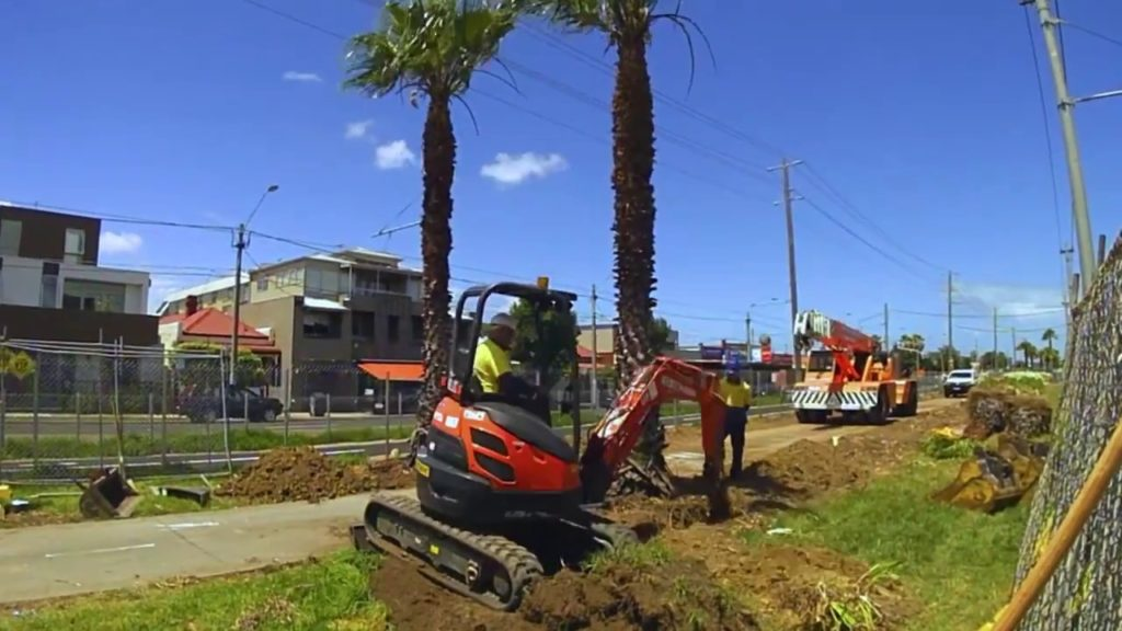 Palm Tree Removal-Southwest Ranches FL Tree Trimming and Stump Grinding Services-We Offer Tree Trimming Services, Tree Removal, Tree Pruning, Tree Cutting, Residential and Commercial Tree Trimming Services, Storm Damage, Emergency Tree Removal, Land Clearing, Tree Companies, Tree Care Service, Stump Grinding, and we're the Best Tree Trimming Company Near You Guaranteed!