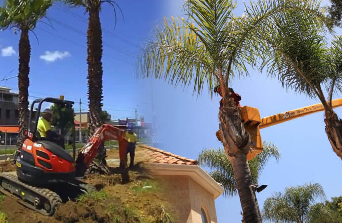 Palm tree trimming & palm tree removal-Southwest Ranches FL Tree Trimming and Stump Grinding Services-We Offer Tree Trimming Services, Tree Removal, Tree Pruning, Tree Cutting, Residential and Commercial Tree Trimming Services, Storm Damage, Emergency Tree Removal, Land Clearing, Tree Companies, Tree Care Service, Stump Grinding, and we're the Best Tree Trimming Company Near You Guaranteed!