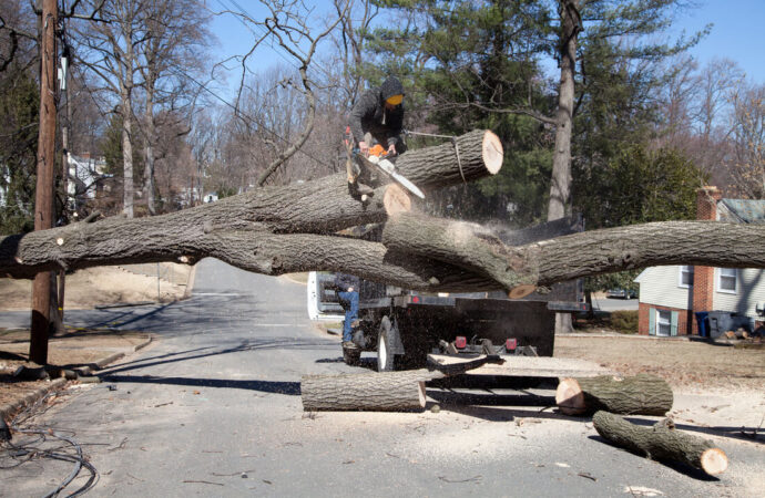 Residential Tree Services-Southwest Ranches FL Tree Trimming and Stump Grinding Services-We Offer Tree Trimming Services, Tree Removal, Tree Pruning, Tree Cutting, Residential and Commercial Tree Trimming Services, Storm Damage, Emergency Tree Removal, Land Clearing, Tree Companies, Tree Care Service, Stump Grinding, and we're the Best Tree Trimming Company Near You Guaranteed!