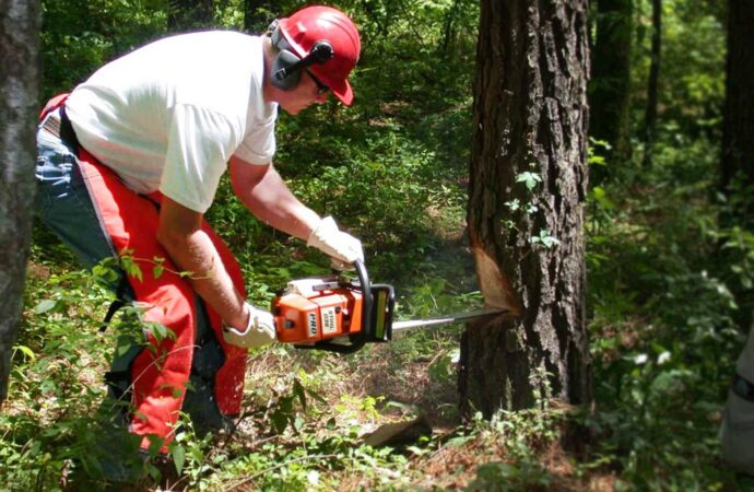 Southwest Ranches FL Tree Trimming and Stump Grinding Services Home Page Image-We Offer Tree Trimming Services, Tree Removal, Tree Pruning, Tree Cutting, Residential and Commercial Tree Trimming Services, Storm Damage, Emergency Tree Removal, Land Clearing, Tree Companies, Tree Care Service, Stump Grinding, and we're the Best Tree Trimming Company Near You Guaranteed!
