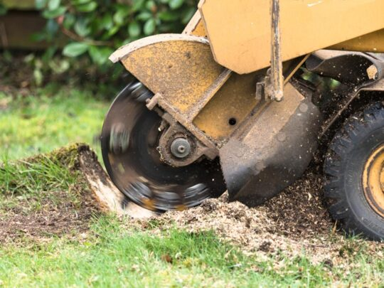 Stump Grinding-Southwest Ranches FL Tree Trimming and Stump Grinding Services-We Offer Tree Trimming Services, Tree Removal, Tree Pruning, Tree Cutting, Residential and Commercial Tree Trimming Services, Storm Damage, Emergency Tree Removal, Land Clearing, Tree Companies, Tree Care Service, Stump Grinding, and we're the Best Tree Trimming Company Near You Guaranteed!
