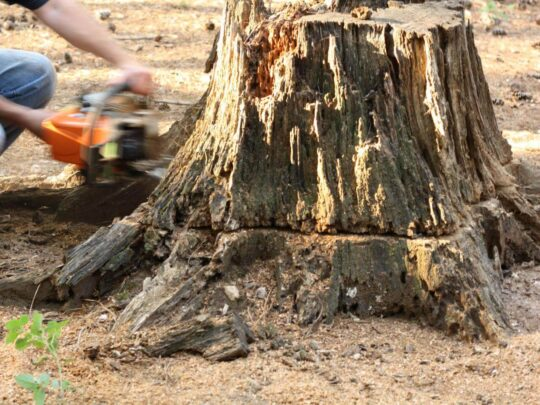 Stump Removal-Southwest Ranches FL Tree Trimming and Stump Grinding Services-We Offer Tree Trimming Services, Tree Removal, Tree Pruning, Tree Cutting, Residential and Commercial Tree Trimming Services, Storm Damage, Emergency Tree Removal, Land Clearing, Tree Companies, Tree Care Service, Stump Grinding, and we're the Best Tree Trimming Company Near You Guaranteed!
