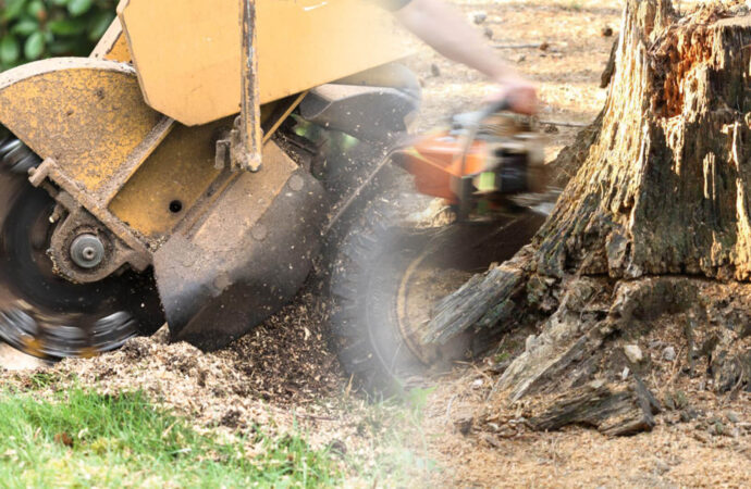 Stump grinding & removal-Southwest Ranches FL Tree Trimming and Stump Grinding Services-We Offer Tree Trimming Services, Tree Removal, Tree Pruning, Tree Cutting, Residential and Commercial Tree Trimming Services, Storm Damage, Emergency Tree Removal, Land Clearing, Tree Companies, Tree Care Service, Stump Grinding, and we're the Best Tree Trimming Company Near You Guaranteed!
