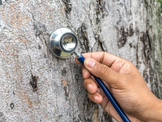 Tree Assessments-Southwest Ranches FL Tree Trimming and Stump Grinding Services-We Offer Tree Trimming Services, Tree Removal, Tree Pruning, Tree Cutting, Residential and Commercial Tree Trimming Services, Storm Damage, Emergency Tree Removal, Land Clearing, Tree Companies, Tree Care Service, Stump Grinding, and we're the Best Tree Trimming Company Near You Guaranteed!