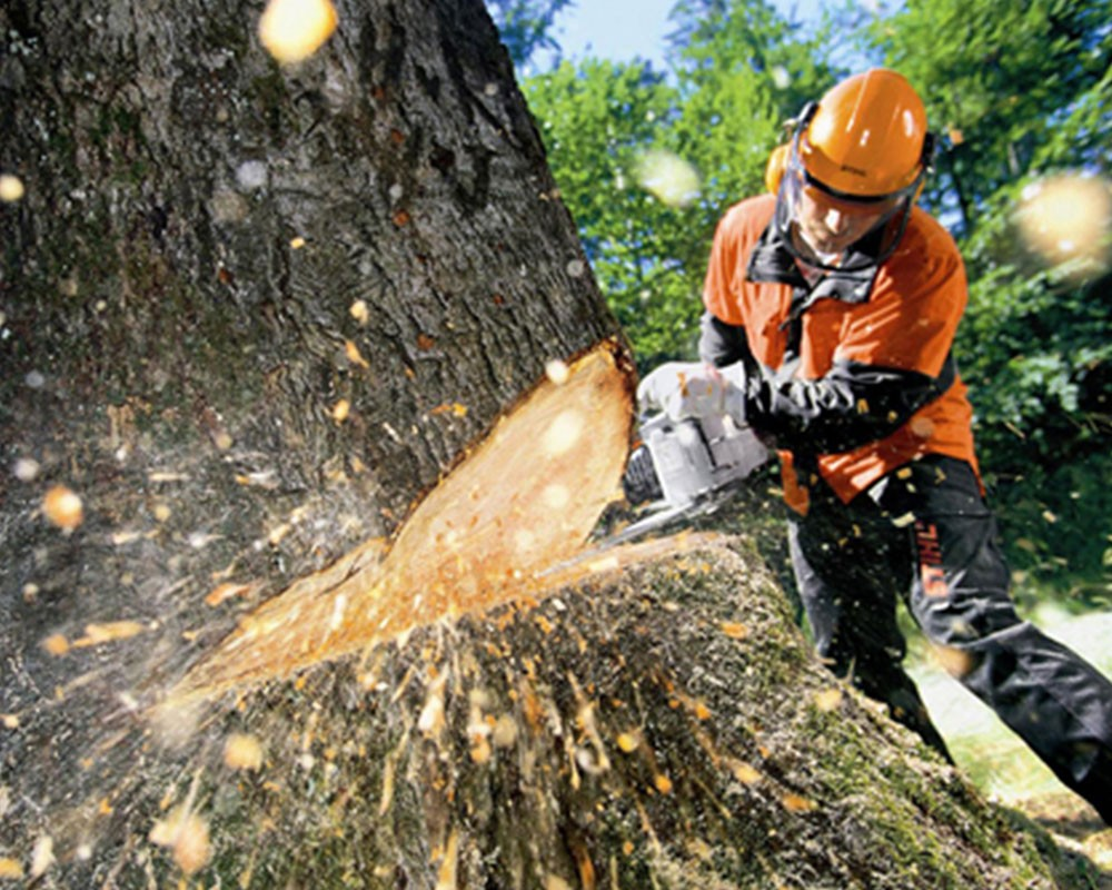 Tree Cutting-Southwest Ranches FL Tree Trimming and Stump Grinding Services-We Offer Tree Trimming Services, Tree Removal, Tree Pruning, Tree Cutting, Residential and Commercial Tree Trimming Services, Storm Damage, Emergency Tree Removal, Land Clearing, Tree Companies, Tree Care Service, Stump Grinding, and we're the Best Tree Trimming Company Near You Guaranteed!