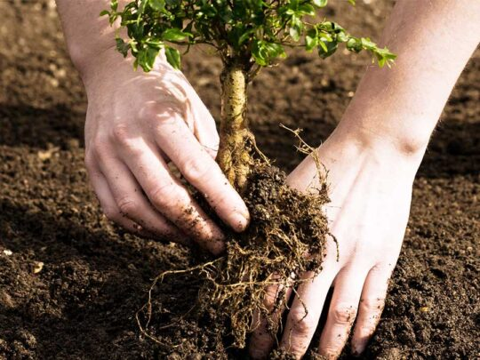Tree Planting-Southwest Ranches FL Tree Trimming and Stump Grinding Services-We Offer Tree Trimming Services, Tree Removal, Tree Pruning, Tree Cutting, Residential and Commercial Tree Trimming Services, Storm Damage, Emergency Tree Removal, Land Clearing, Tree Companies, Tree Care Service, Stump Grinding, and we're the Best Tree Trimming Company Near You Guaranteed!