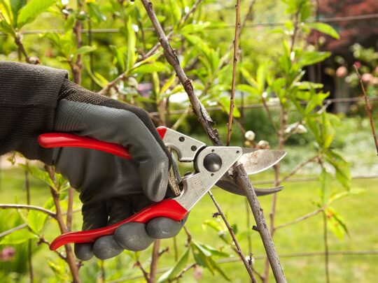 Tree Pruning-Southwest Ranches FL Tree Trimming and Stump Grinding Services-We Offer Tree Trimming Services, Tree Removal, Tree Pruning, Tree Cutting, Residential and Commercial Tree Trimming Services, Storm Damage, Emergency Tree Removal, Land Clearing, Tree Companies, Tree Care Service, Stump Grinding, and we're the Best Tree Trimming Company Near You Guaranteed!