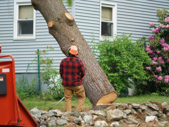 Tree Removal-Southwest Ranches FL Tree Trimming and Stump Grinding Services-We Offer Tree Trimming Services, Tree Removal, Tree Pruning, Tree Cutting, Residential and Commercial Tree Trimming Services, Storm Damage, Emergency Tree Removal, Land Clearing, Tree Companies, Tree Care Service, Stump Grinding, and we're the Best Tree Trimming Company Near You Guaranteed!