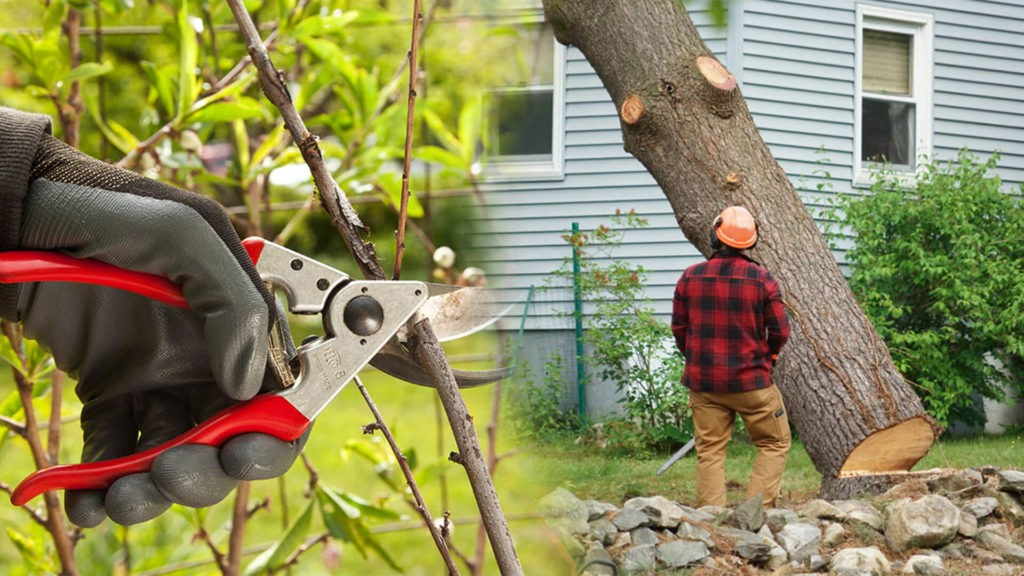 Tree pruning & tree removal-Southwest Ranches FL Tree Trimming and Stump Grinding Services-We Offer Tree Trimming Services, Tree Removal, Tree Pruning, Tree Cutting, Residential and Commercial Tree Trimming Services, Storm Damage, Emergency Tree Removal, Land Clearing, Tree Companies, Tree Care Service, Stump Grinding, and we're the Best Tree Trimming Company Near You Guaranteed!